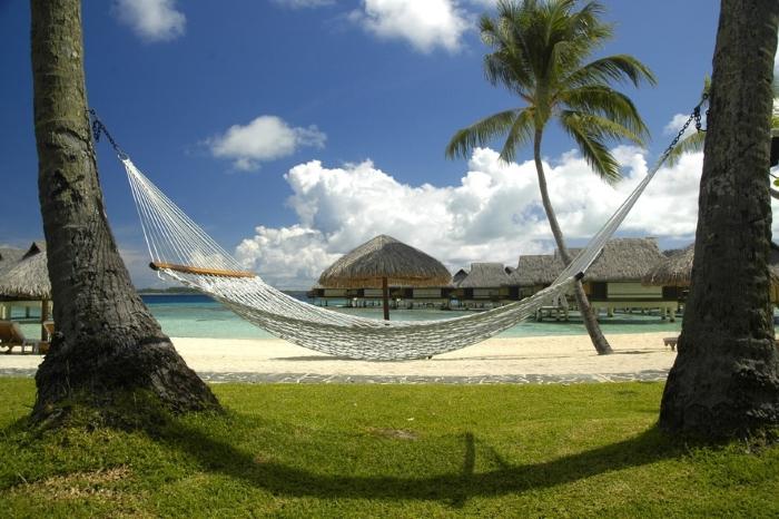 hammock hanging between palm trees near beach